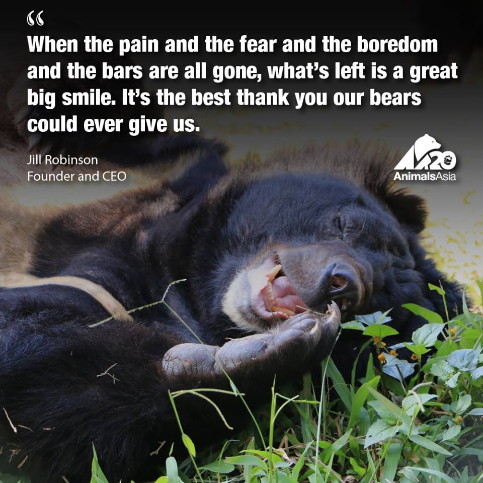 Happy Bear Quote