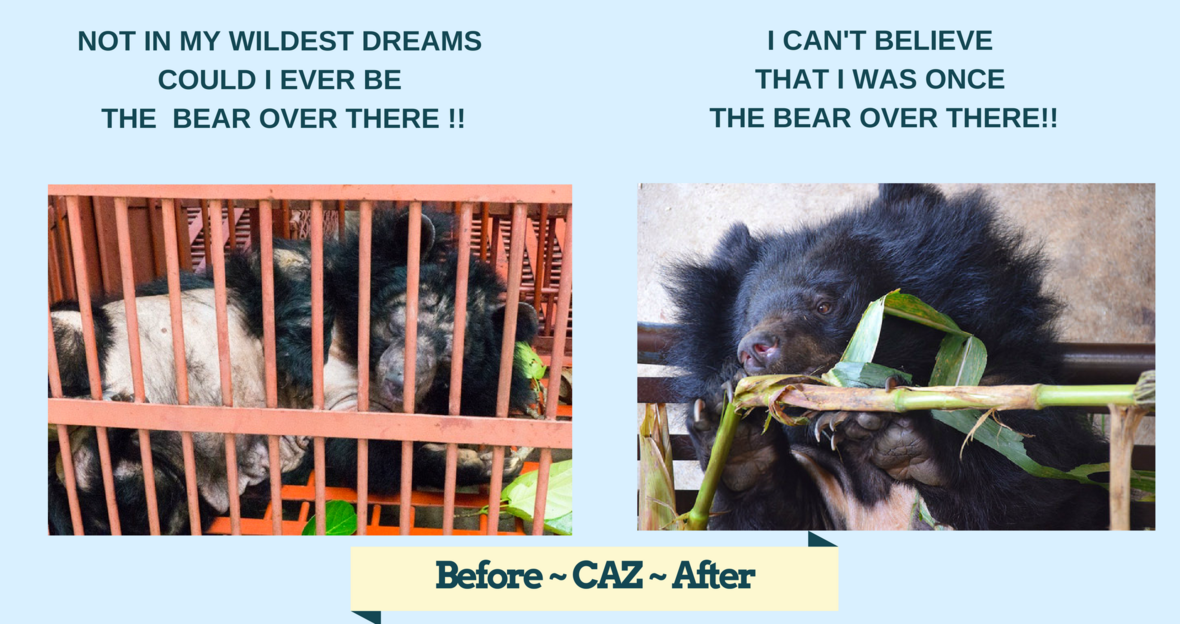 Little Caz before after