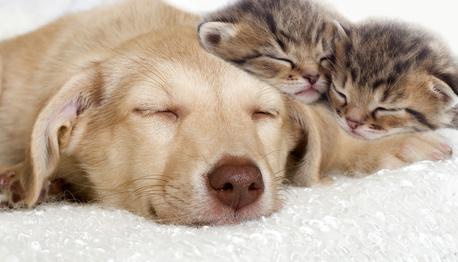 Puppy Kittens Resting