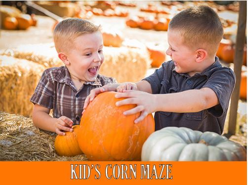 Kids Corn Maze