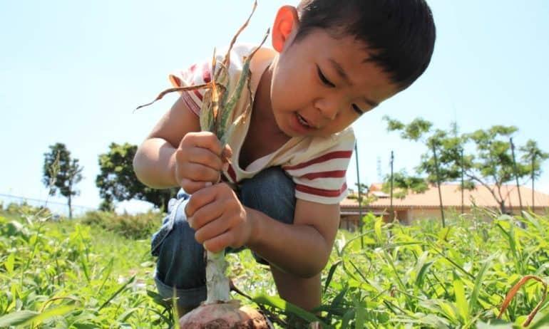 Farm-to-School-Listicle-770x462