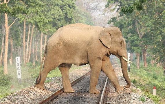 elephant-rail
