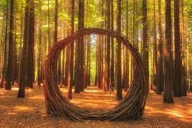 redwoods 7