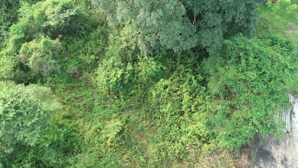 Aerial-image- Section- Pansy North