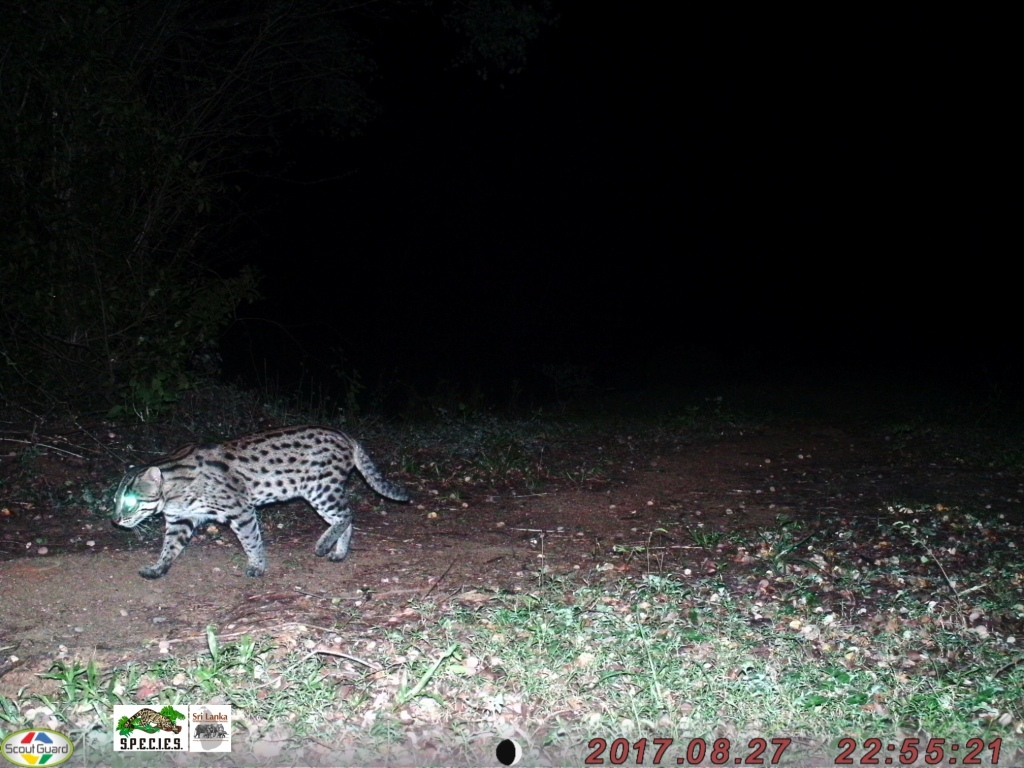 Fishing Cat 2