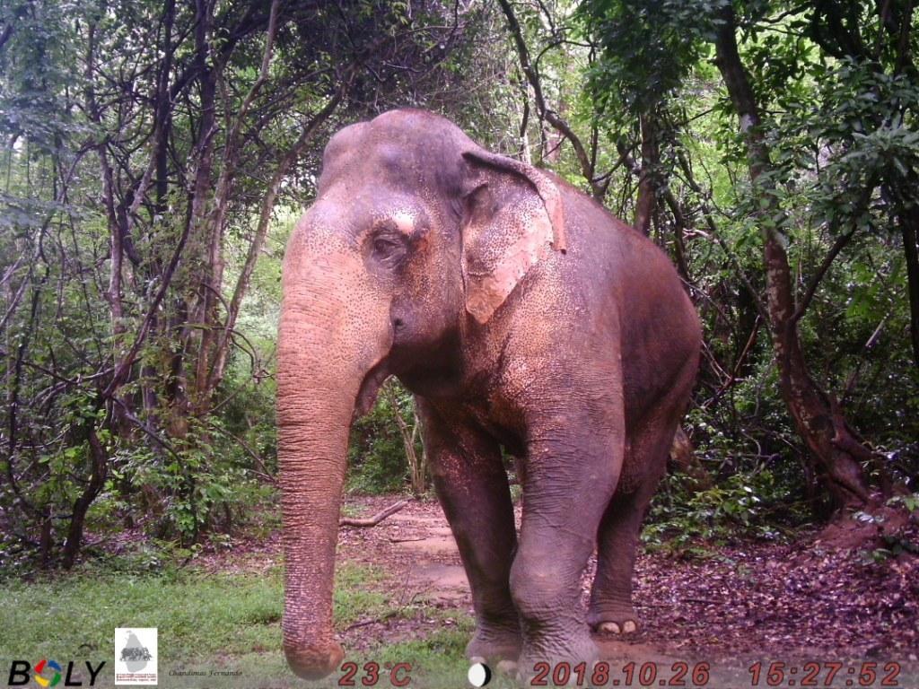 13 Elephant