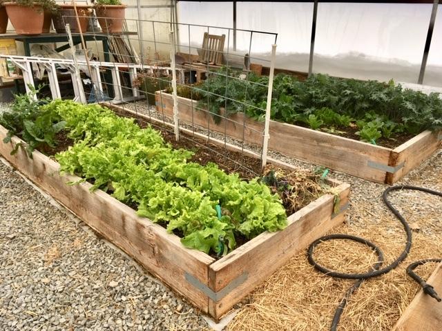 Greenhouse Greens