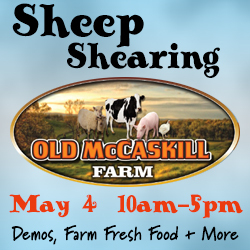 sheep-mccaskill-banner
