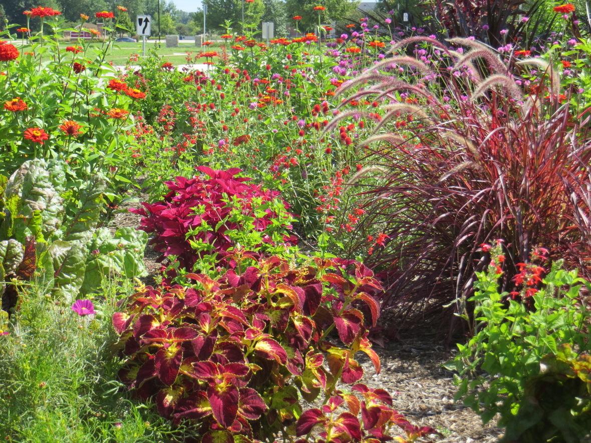 sally flower garden