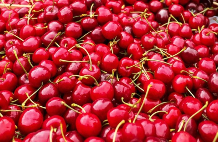 NAFTC TR turkish cherries
