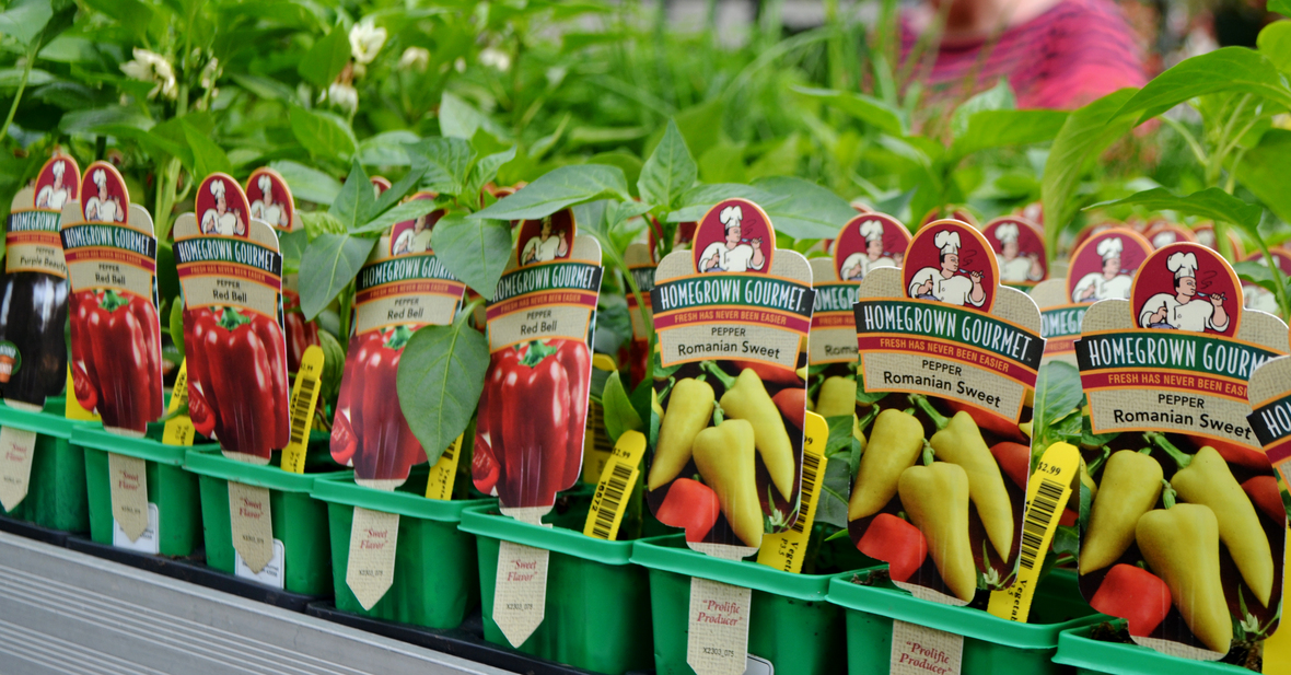 veggiesontable dn