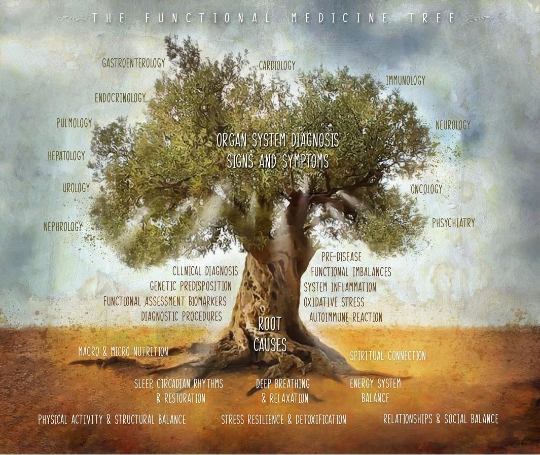 olive-tree low