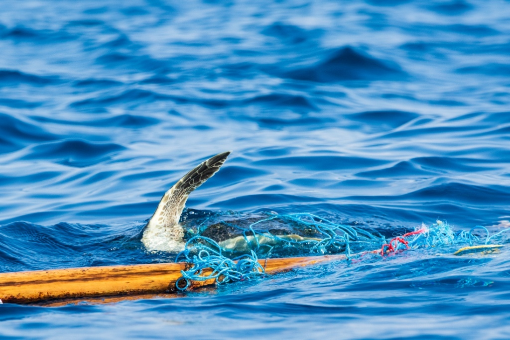 02. Sea Turtles Entangled in Fishing Nets Riaz Cader